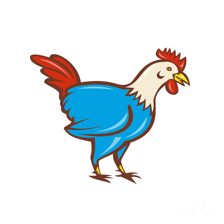 rooster head cartoon - 900×900