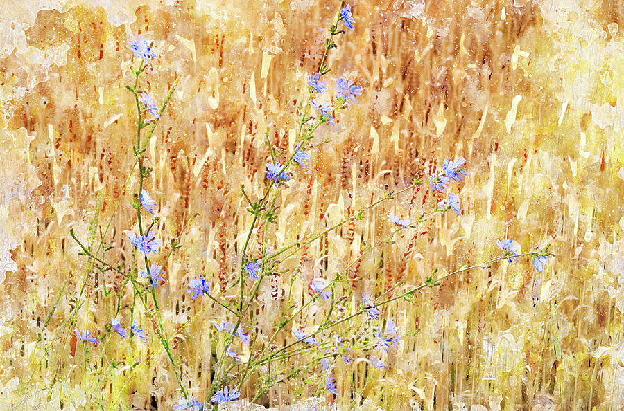 Wheat Digital Art - Chickory N Wheat W C by Peter J Sucy