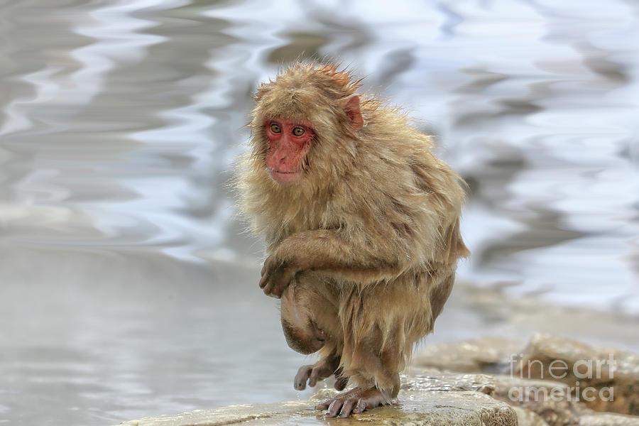 Snow Monkeys Photograph - Chilled by Leigh Lofgren