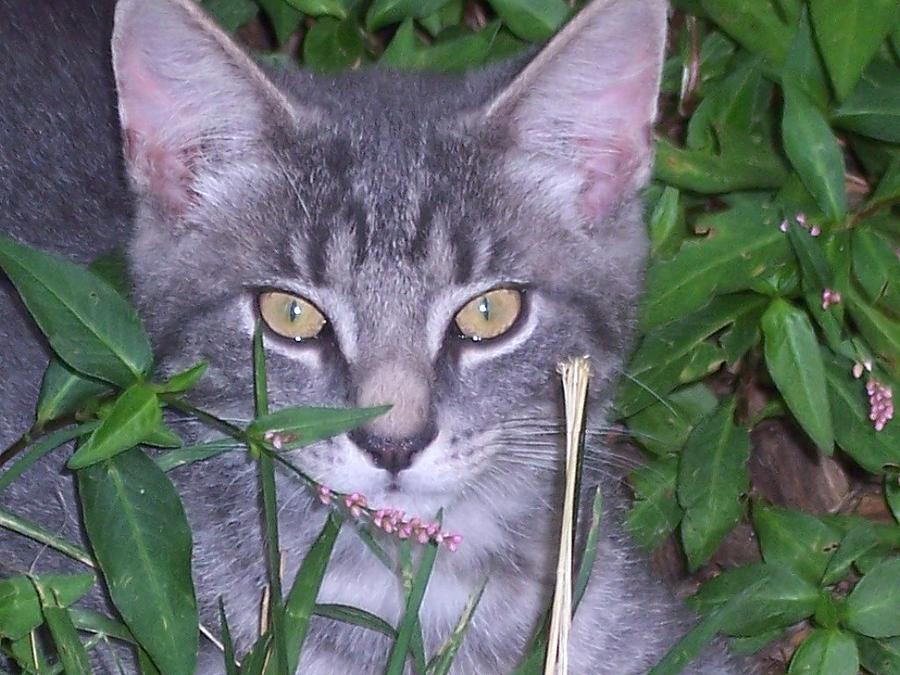 Cats Photograph - Chilling In The Garden by Martha Hoskins