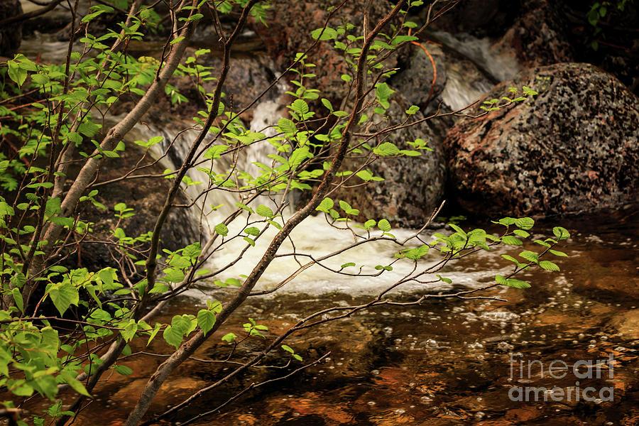 Chimney Pond Trail Baxter State Park Photograph