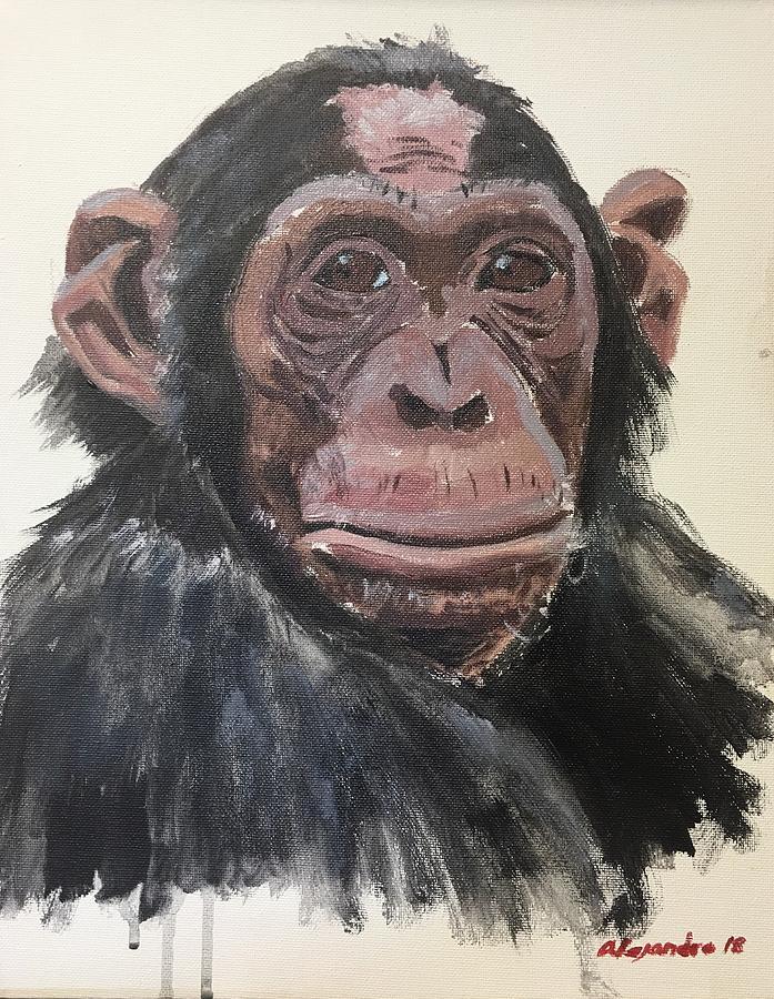 Chimp 1 by Alejandro Lopez-Tasso