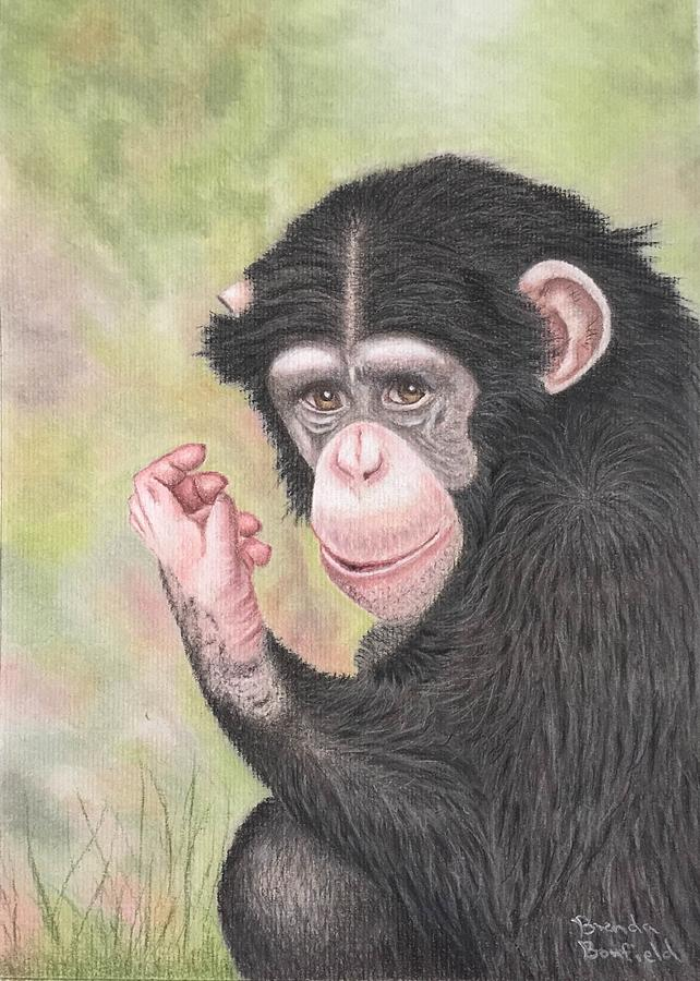 Chimpanzee by Brenda Bonfield