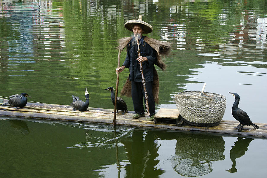 Asia Photograph - Chinese Cormorant Fisherman by Michele Burgess
