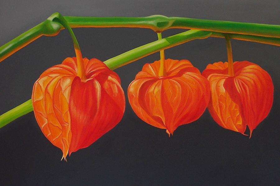 chinese lantern flower paintings  fine art america, Beautiful flower