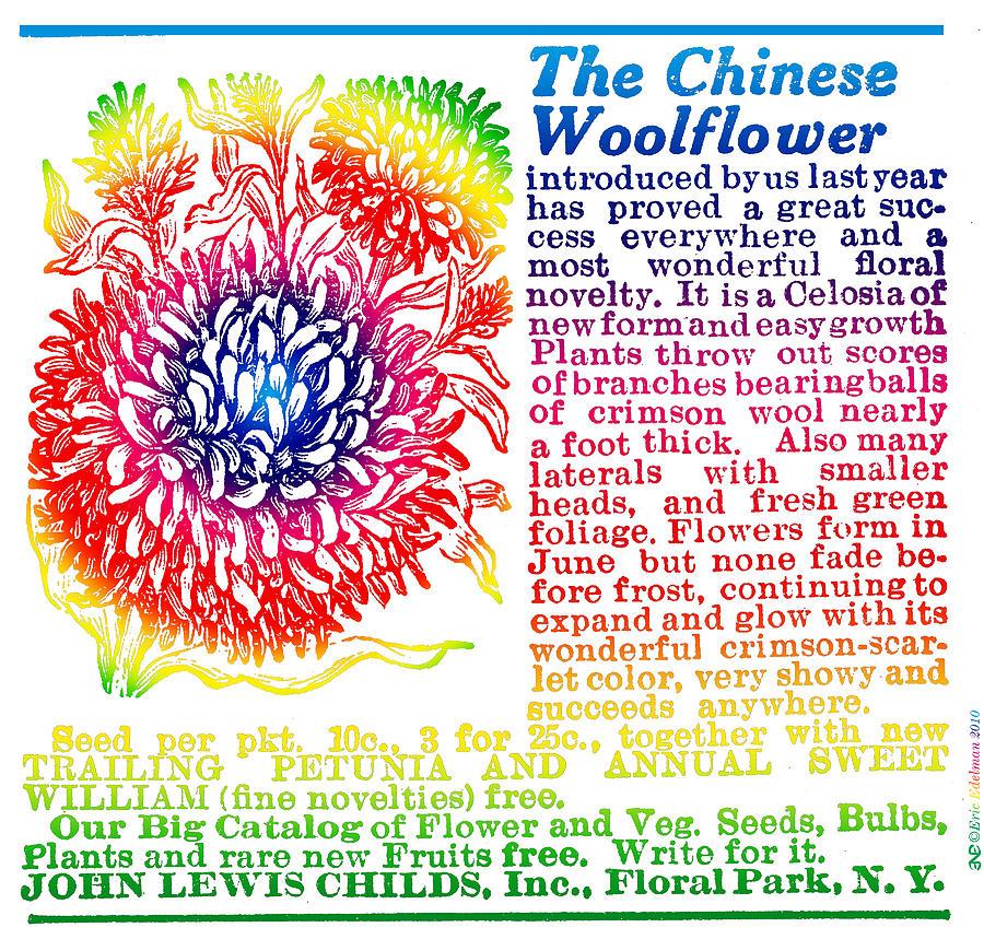 Celosia Digital Art - Chinese Woolflower by Eric Edelman