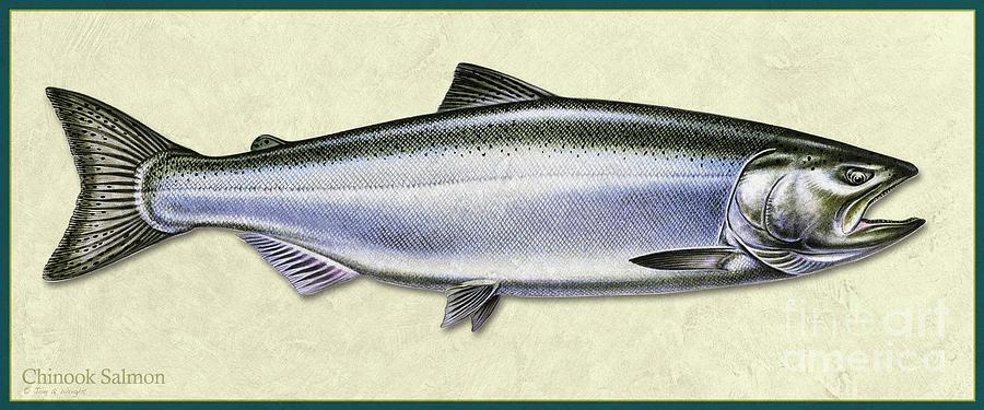 Chinook Salmon ID by Jon Q Wright