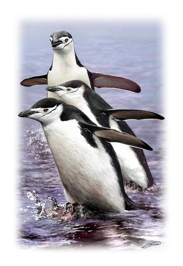 CHINSTRAP PENGUINS 1 by Owen Bell