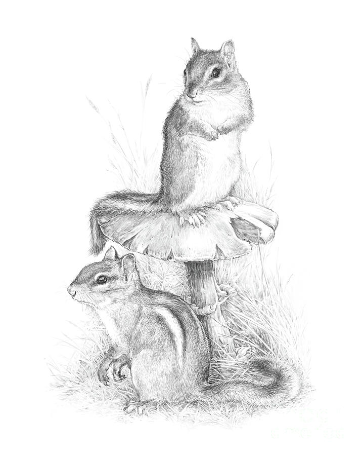 Chipmunk Drawing - Chip And Chatter by Laurie Musser