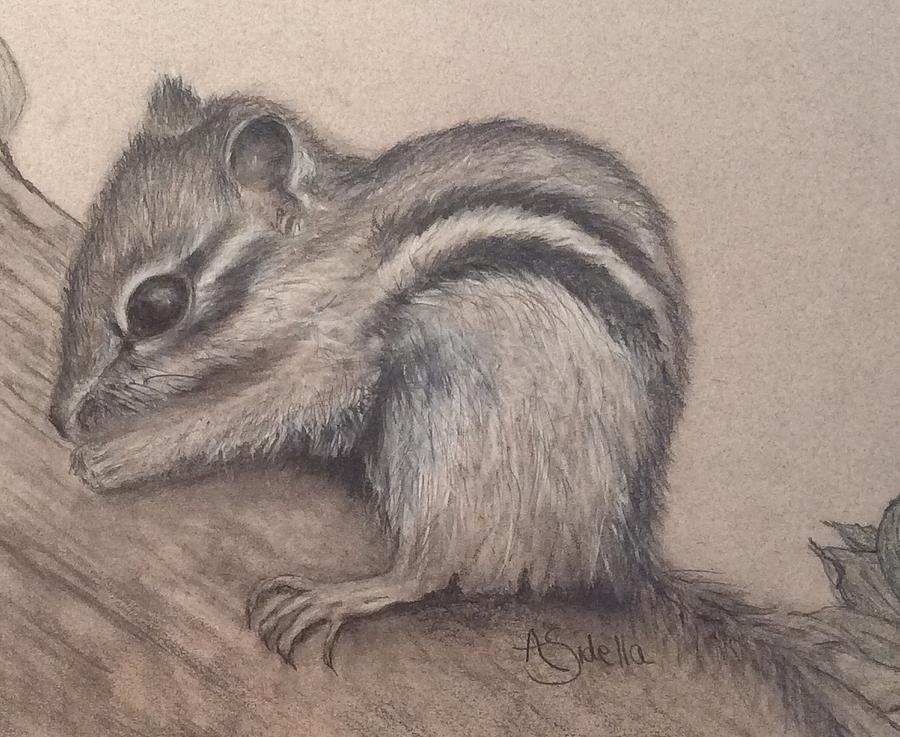 Chipmunk, TN Wildlife Series by Annamarie Sidella-Felts
