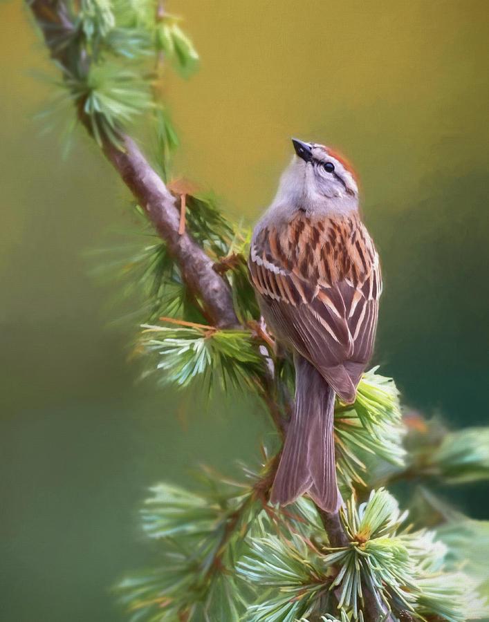 Bird Photograph - Chipper Looking Up by Jerry Deutsch