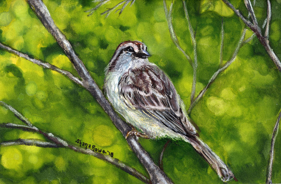 Chipping Sparrow by Shana Rowe Jackson