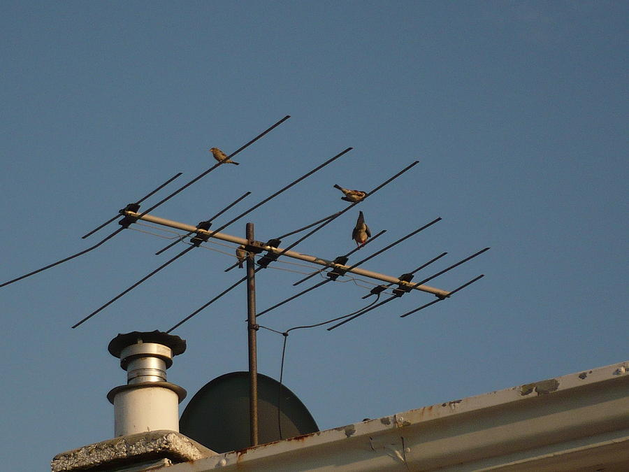 Antenna Photograph - Chirping Antenna by Stephen Davis