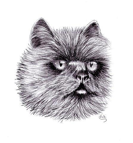 Chloe  Drawing by Vicki Thompson