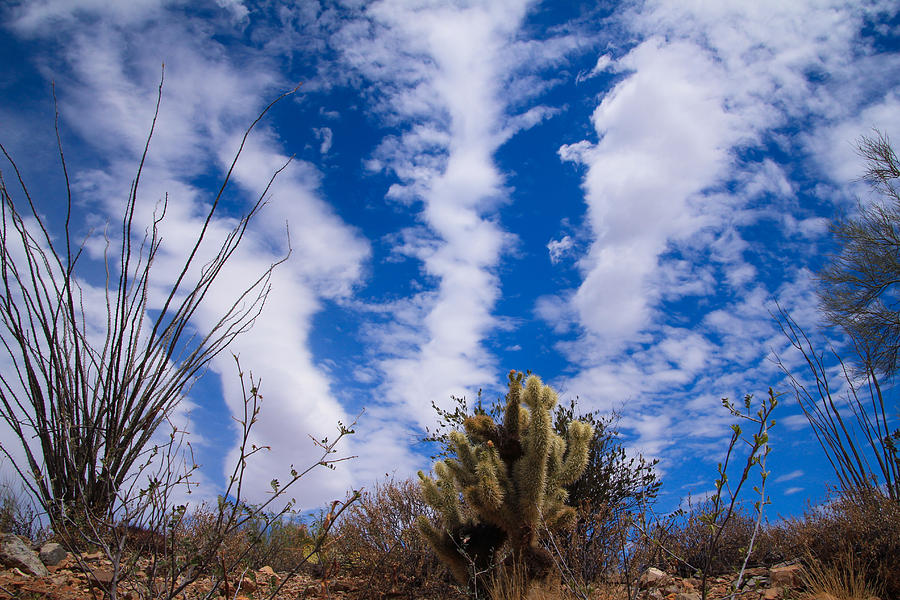 Cholla Blue Sky Photograph by Kevin Mcenerney