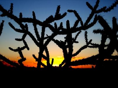 Cholla Photograph - Cholla Sunset by Audrey Kanekoa-Madrid