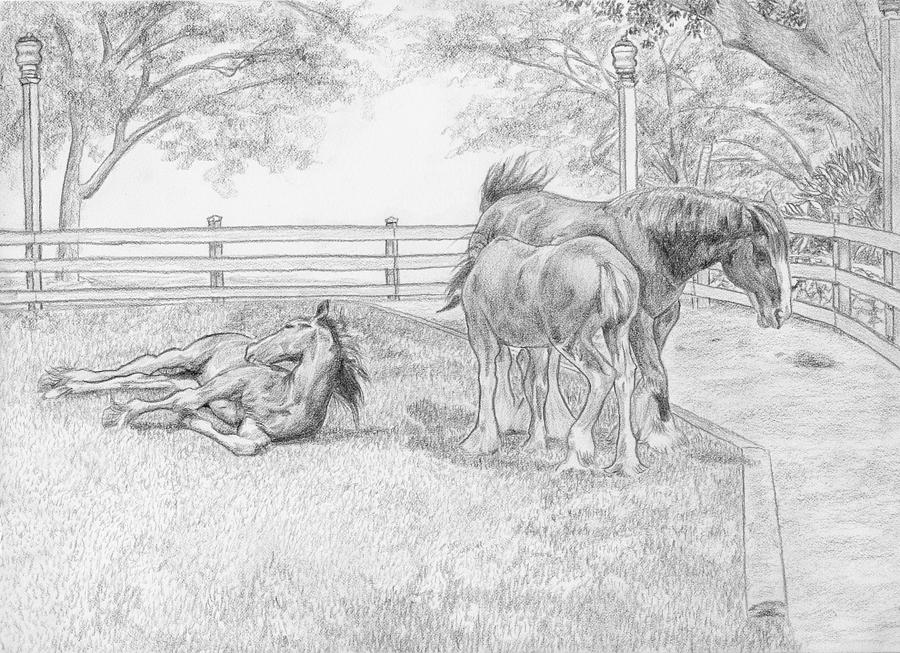 Animals Drawing - Chow Time by Tito Santiago
