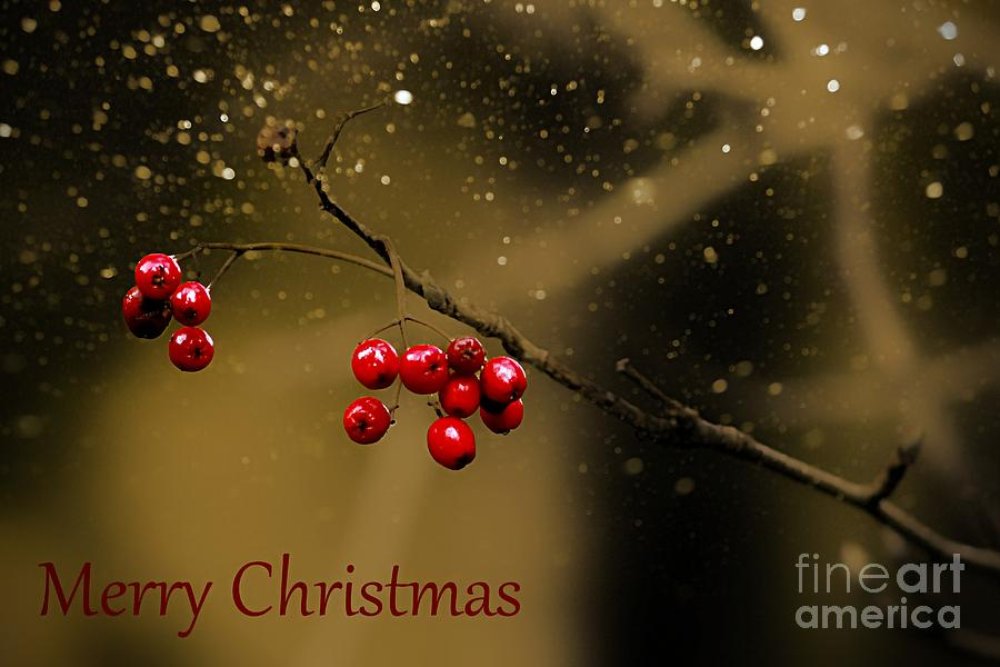 Christmas Berries Photograph