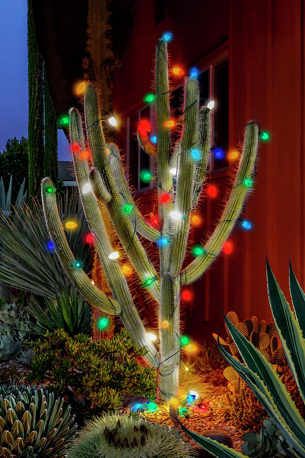 Christmas Cactus Photograph By Kelley King