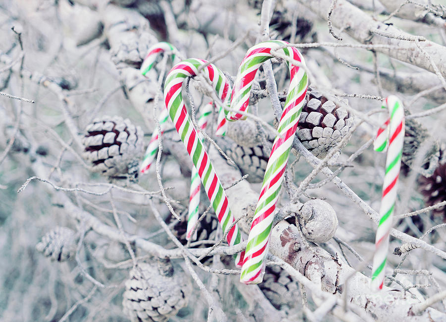 Christmas Candy Tree Photograph