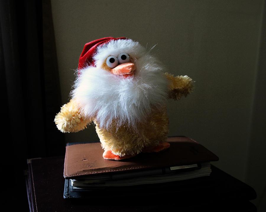 Christmas Chicken Photograph by Allan  Hughes