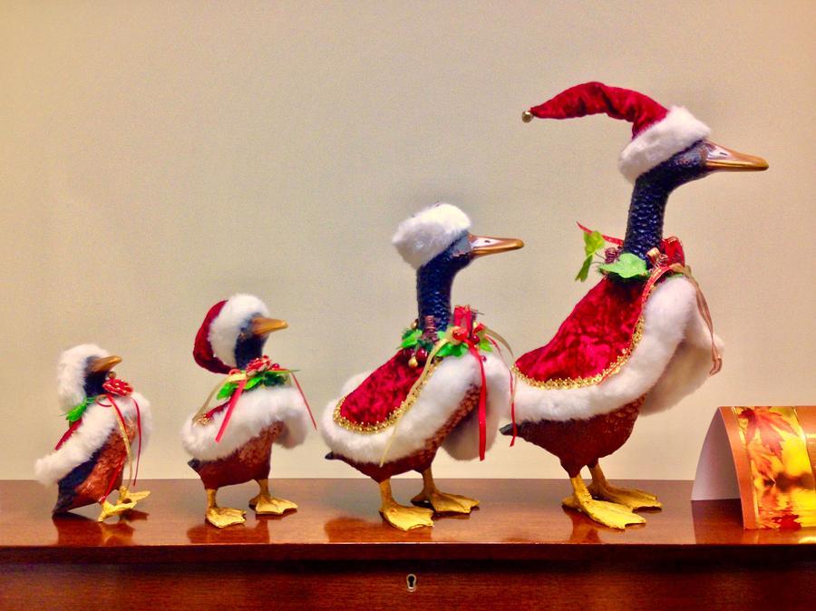 Christmas Duck.Christmas Ducks In A Row