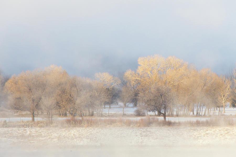 Christmas Eve Foggy Trees Photograph