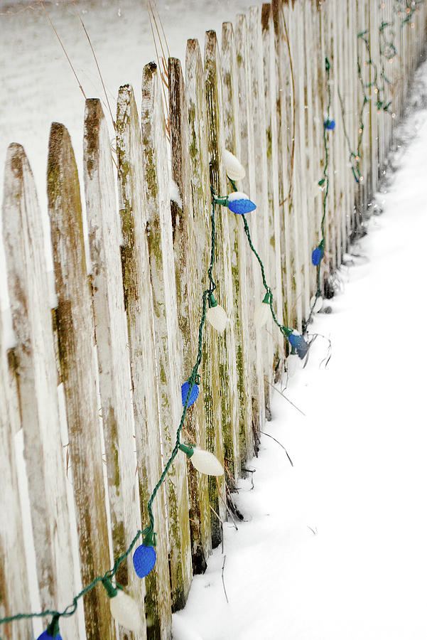 Christmas Fence by Troy Stapek