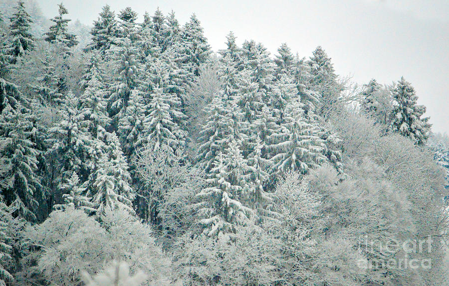 Christmas Forest - Winter In Switzerland Photograph