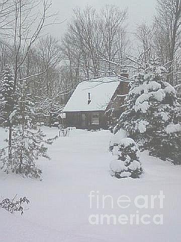 Winter Photograph - Christmas In The Woods by Melissa Miller