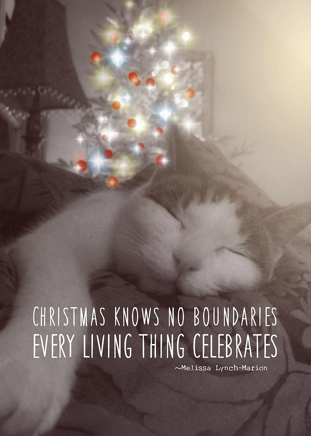 Cat Photograph - Christmas Nap Quote by JAMART Photography