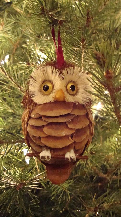 Owl Photograph - Christmas Owl by Nikita Zabowski