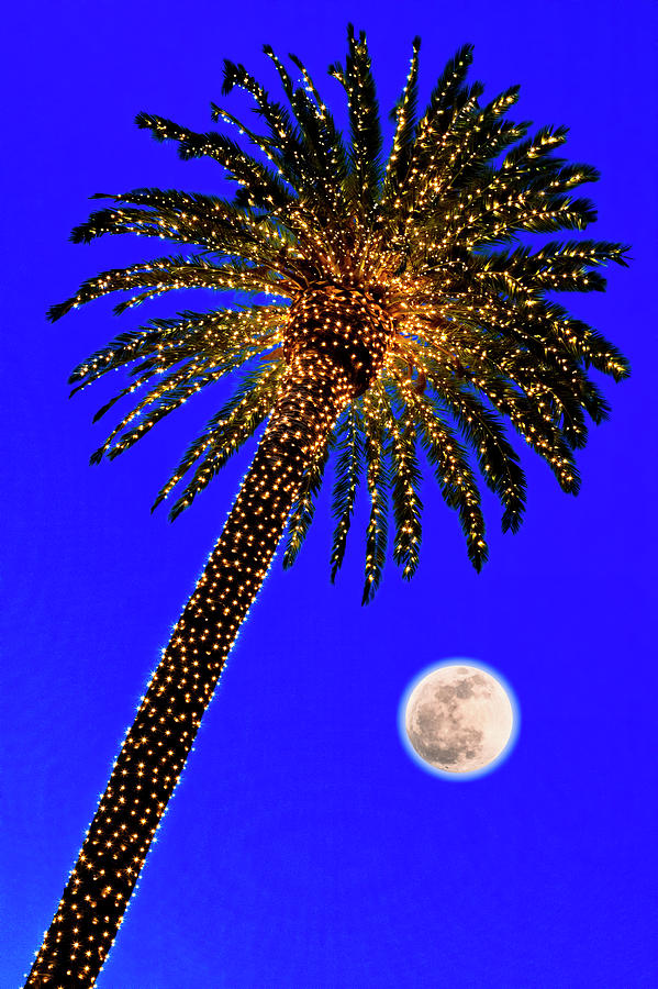 Christmas Palm Tree And Moon Photograph by Garry Gay