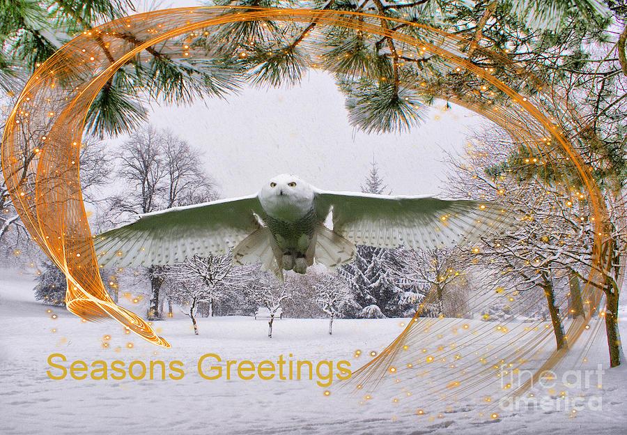 Christmas Snowy Owl Photograph