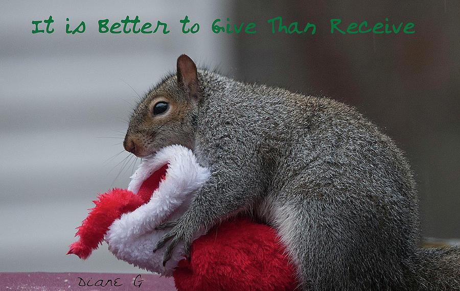Christmas Squirrel.Christmas Squirrel