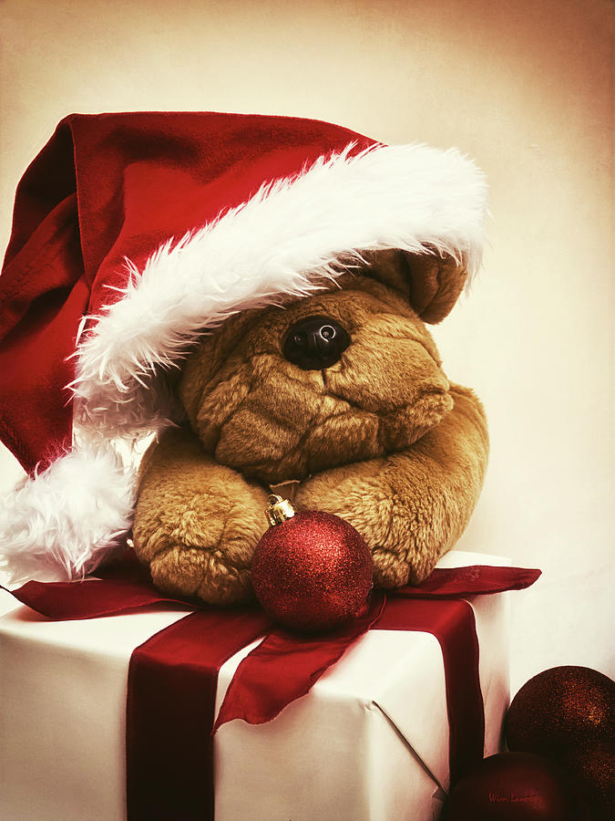 Christmas Photograph - Christmas Teddy Bear by Wim Lanclus