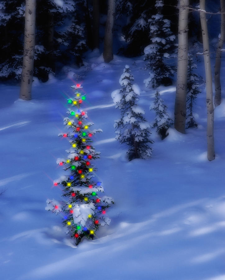 Christmas Tree Photograph - Christmas Tree In Snow by Utah Images