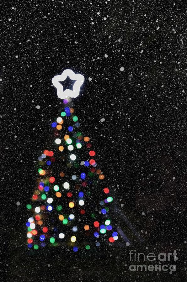 Christmas Bush Lights.Christmas Tree Lights Bokeh