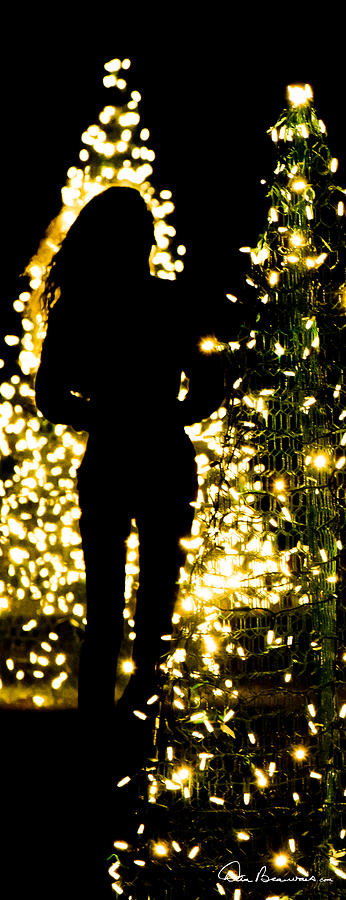 Christmas Tree Walk 2466 Photograph