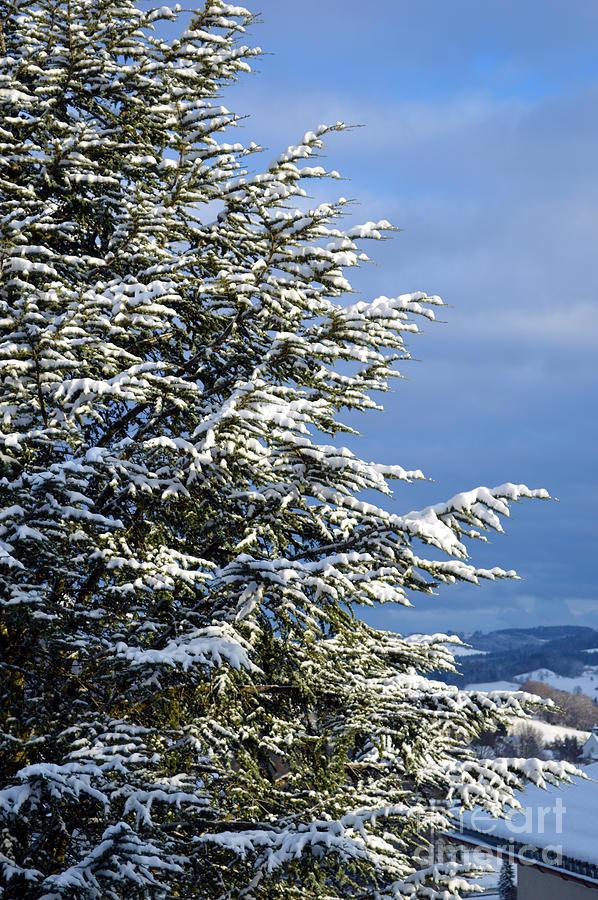 Christmas Tree - Winter In Switzerland Photograph