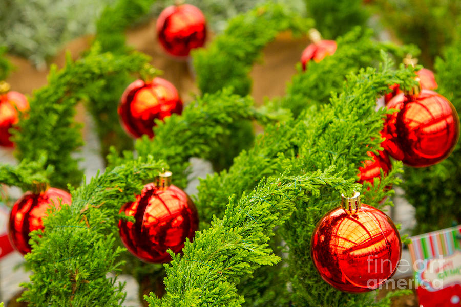 Abstracts Photograph - Christmas Trees by Marilyn Cornwell