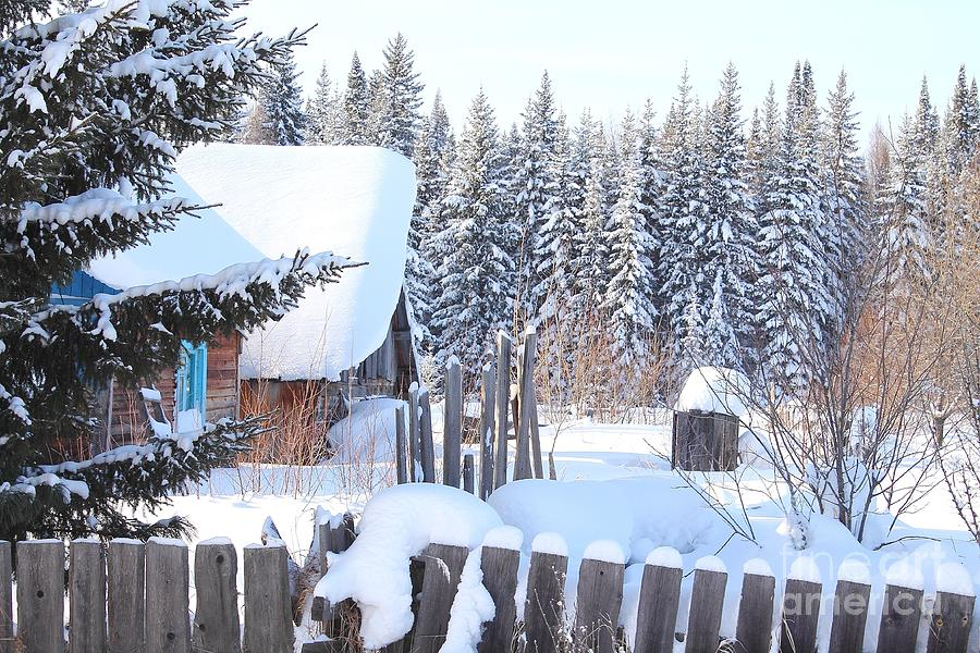 Christmas View. Winter Landscape With Fir Trees In The Snow. Photograph