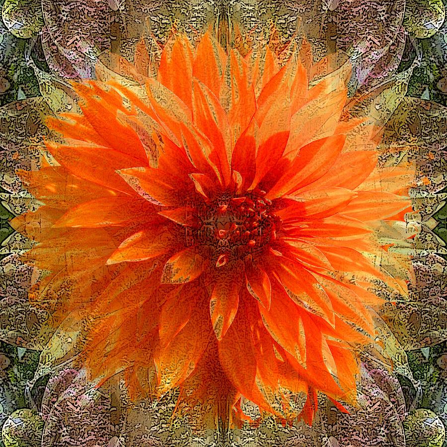 Chrysanthemum Photograph - Chrysanthemum by Tom Romeo