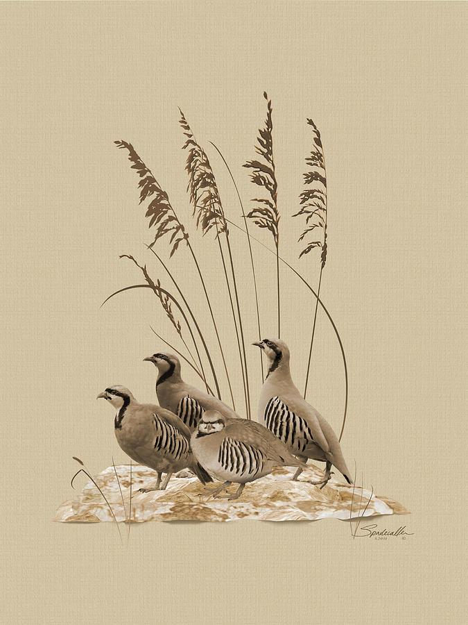 Partridge Digital Art - Chukar Partridges by M Spadecaller