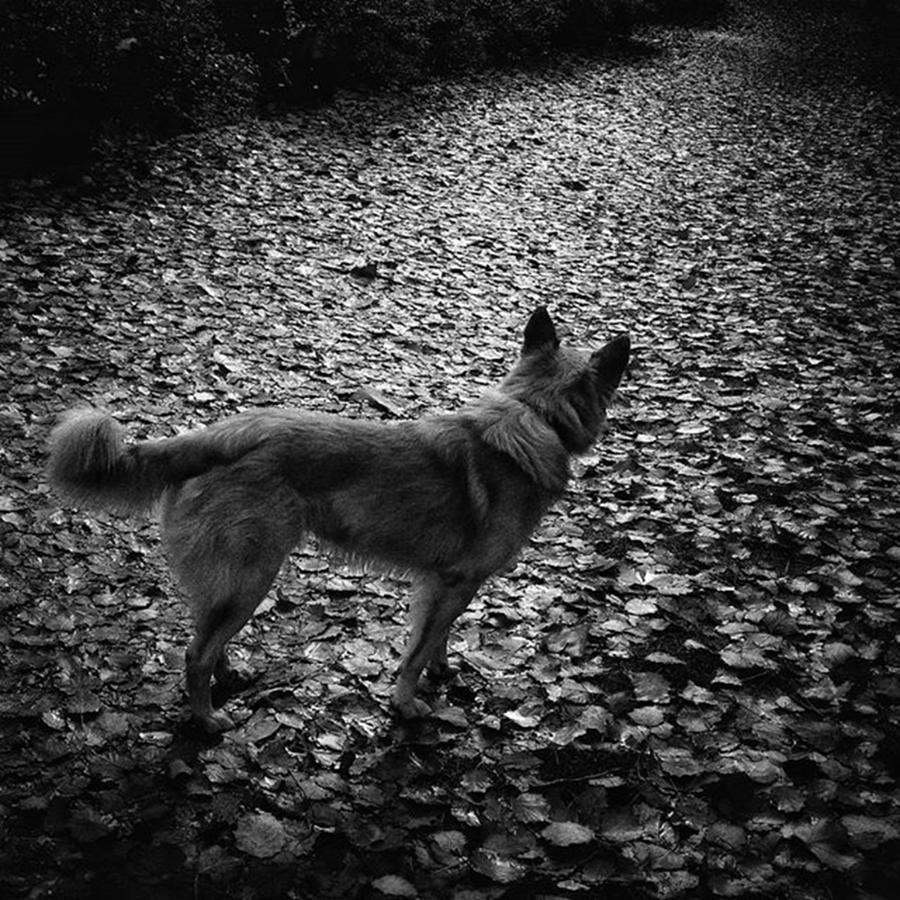 Madrid Photograph - Chuvak  #dog #dogslover #animal #pet by Rafa Rivas