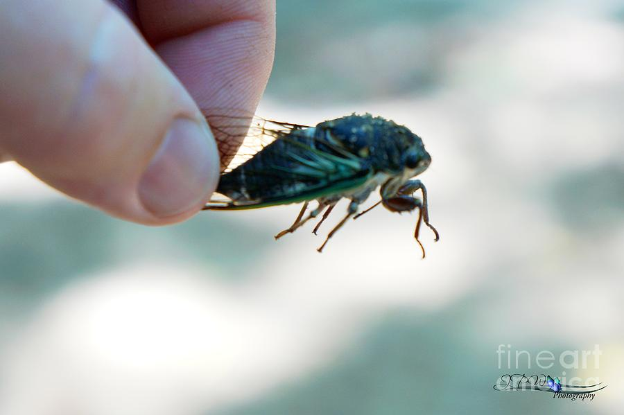 Cicada Angle 2 Photograph