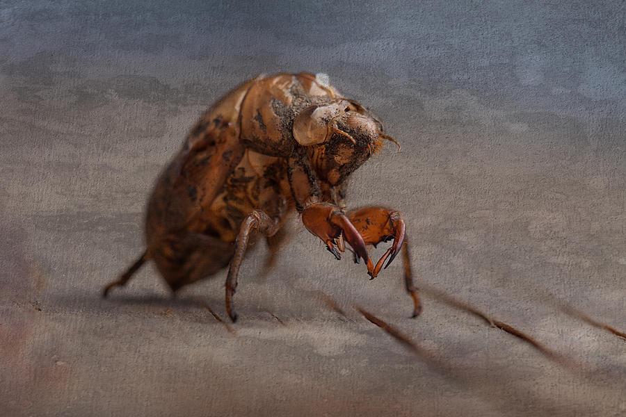 Locust Photograph - Cicada Shell by Tom Mc Nemar