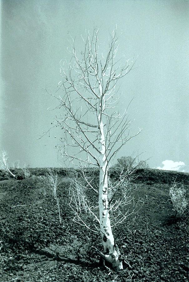 Cinder Tree Photograph by Cameron Hampton P S A