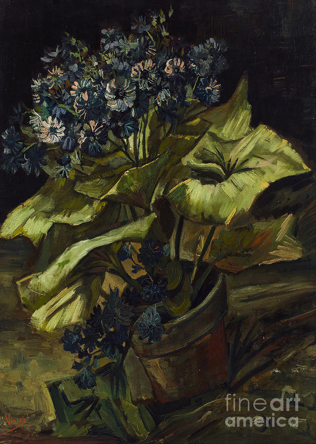 Vicent Painting - Cineraria by Van Gogh