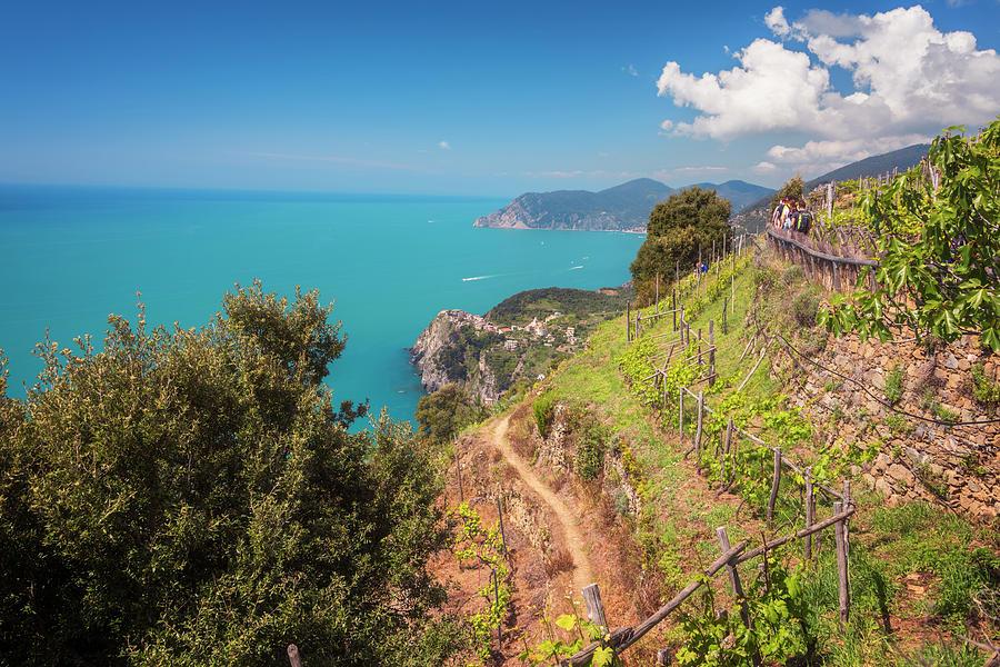 Joan Carroll Photograph - Cinque Terre Italy Vineyard Walk by Joan Carroll